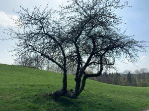 Der geknickte Baum