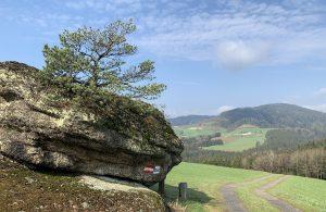 Baum am Stein
