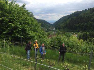Spiriwalk Weingarten