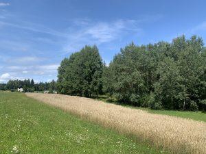 Kleine Felder