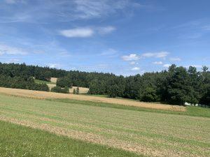 Felder im Wald